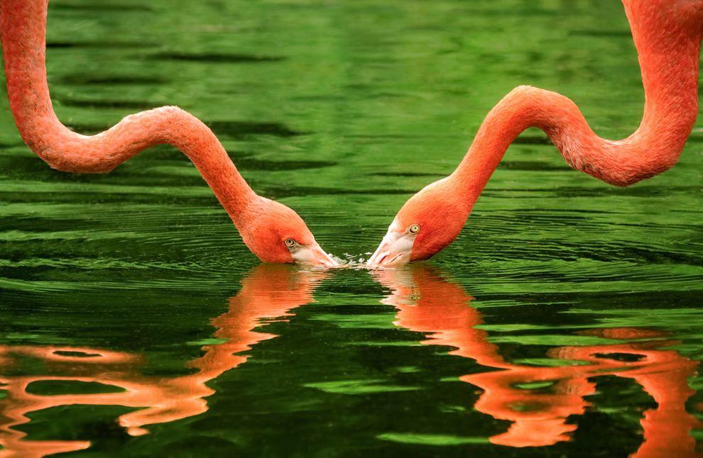 Flamingos Balance Art Symmetry Art Symmetry Design