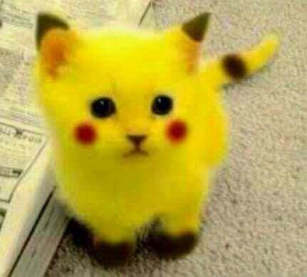 Sooooooooooooo cute #picachucat