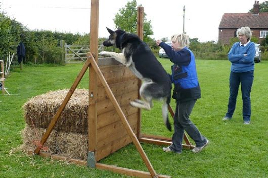 Indianapolis Dog Training Rachel Lincks Is The Head Trainer For