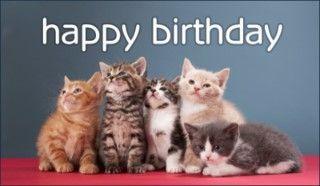 Birthday Kittens Newborn Kittens Kittens Cutest Kitten Birthday