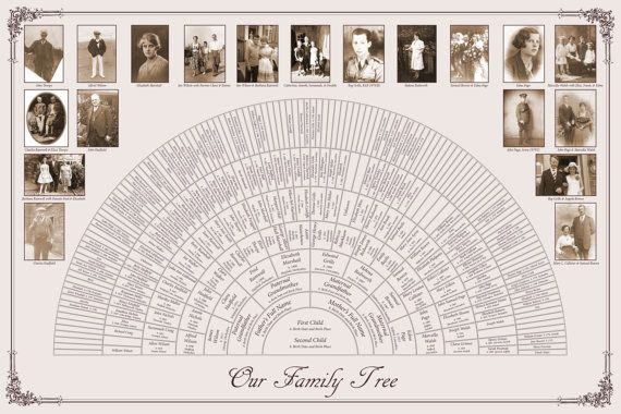 custom family tree 20x30 8 generation fan chart by familytreecmg