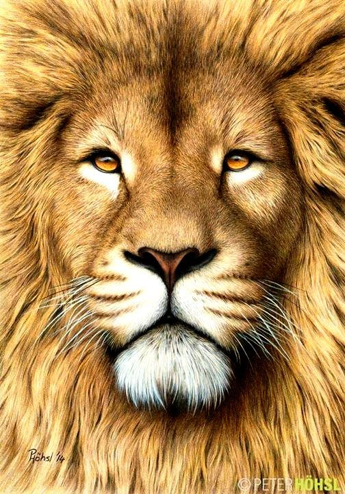 Colour Drawing Of Lion Pics