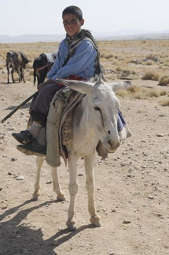 Boy and his donkey - Afghanistan