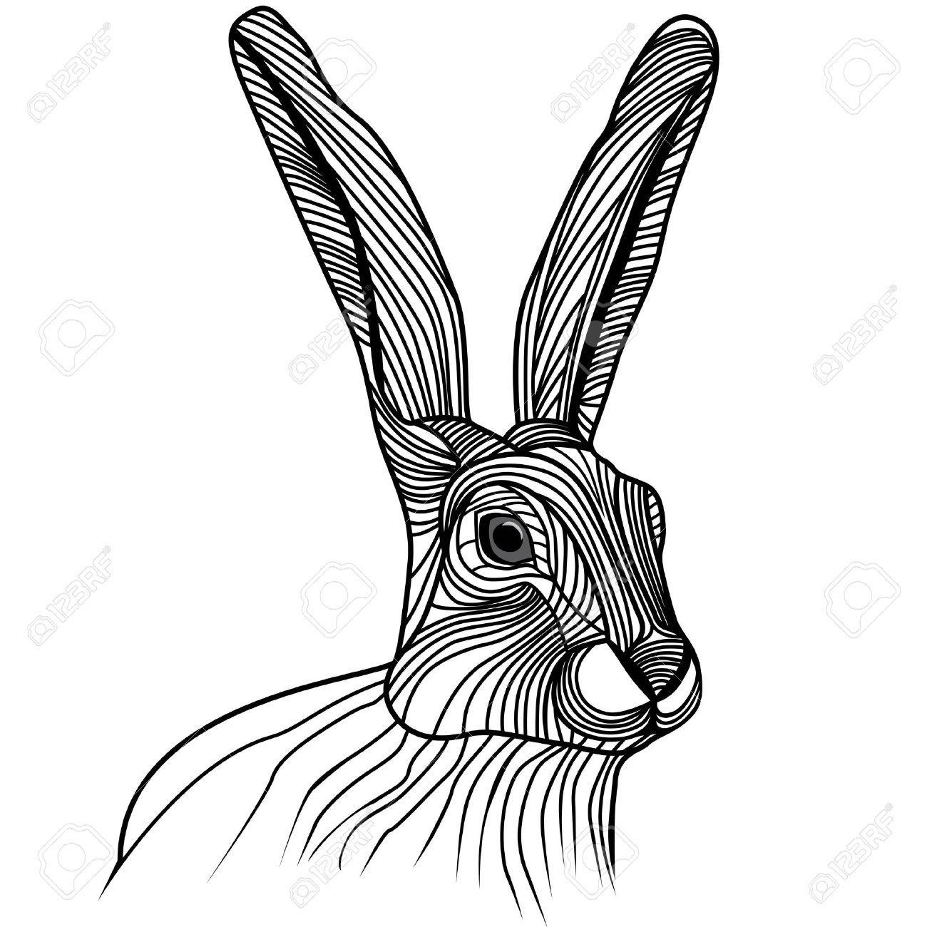 Rabbit Or Hare Head Animal Illustration For T Shirt Sketch