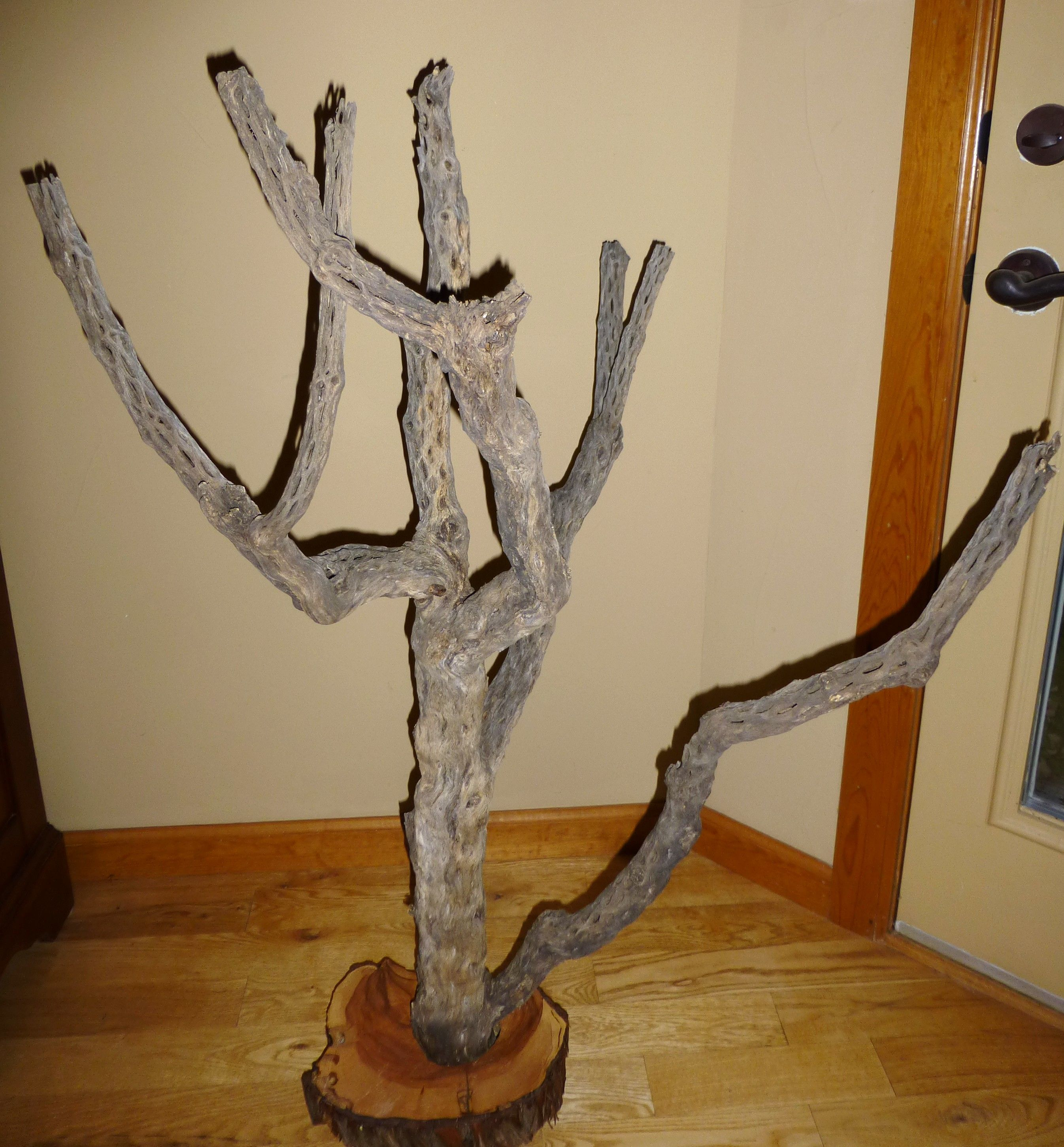 Cholla Cactus Wood Tree To Display Ornaments