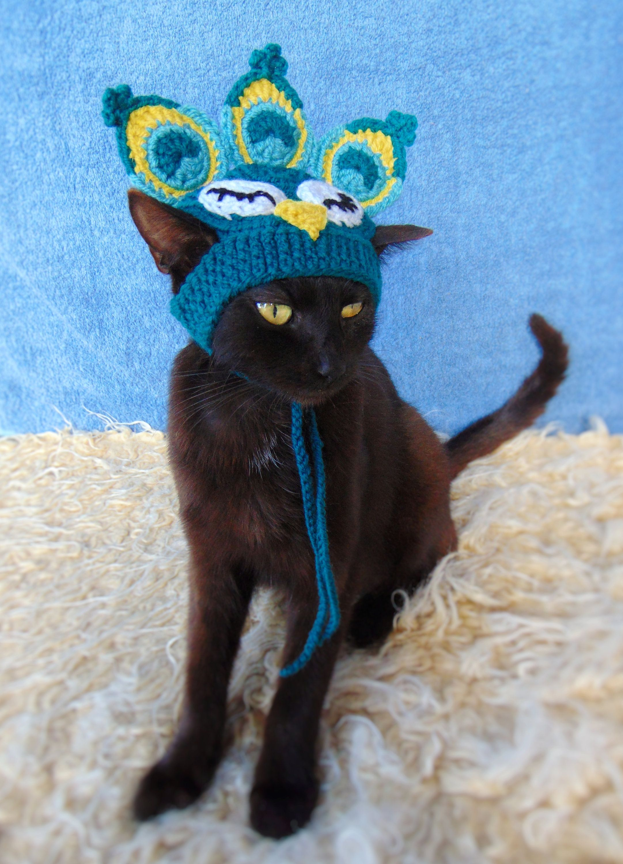 Peacock hat for cat, Peacock pet costume, Kitten accessories, Hats for cats, Gift for cat lover
