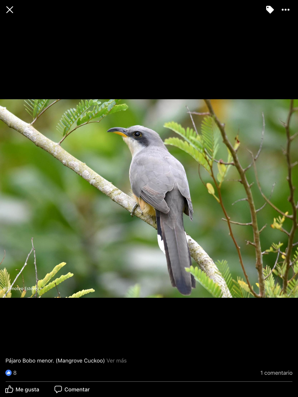 Pin En Flora Y Fauna De La Isla De Santo Domingo