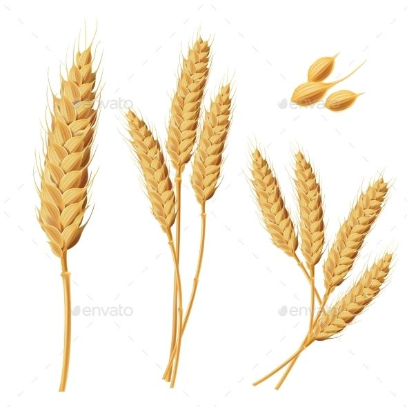 Illustrations of Wheat Sprouts Fonts-logos-icons Pinterest - wheat template