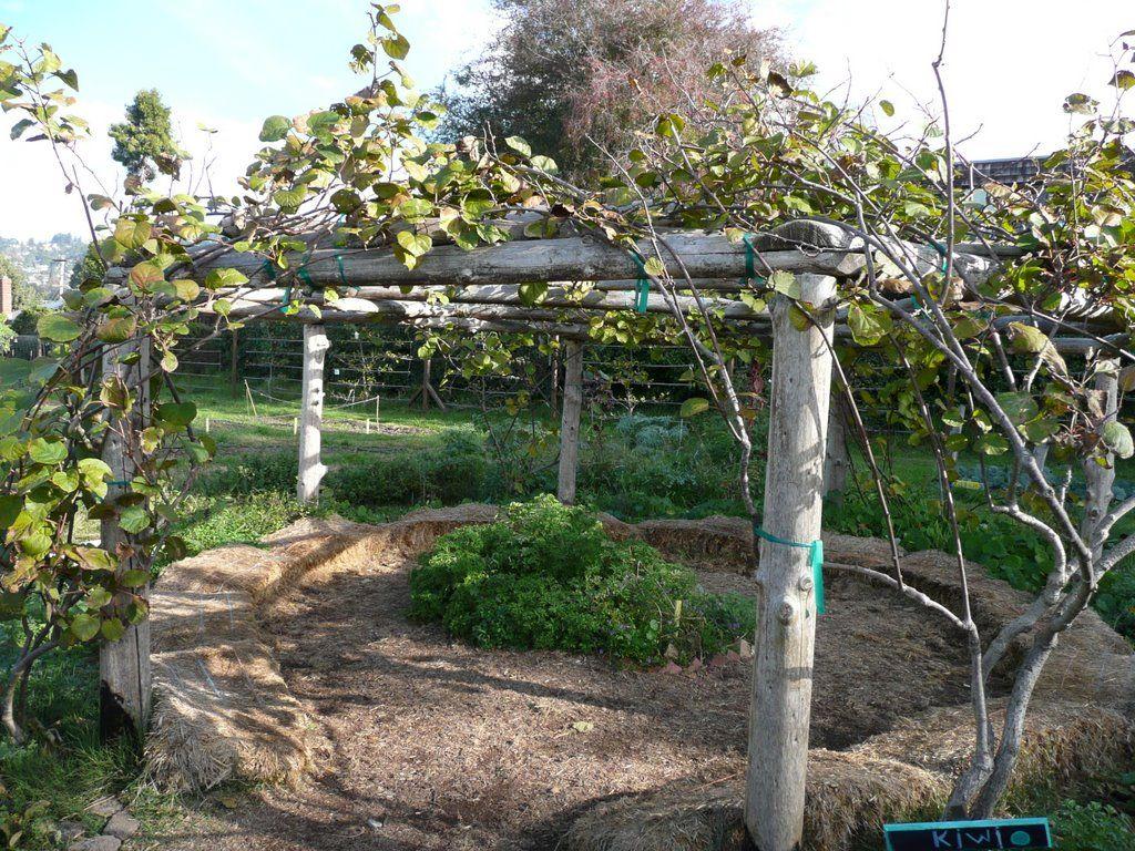 School Garden Elements Photo Albums