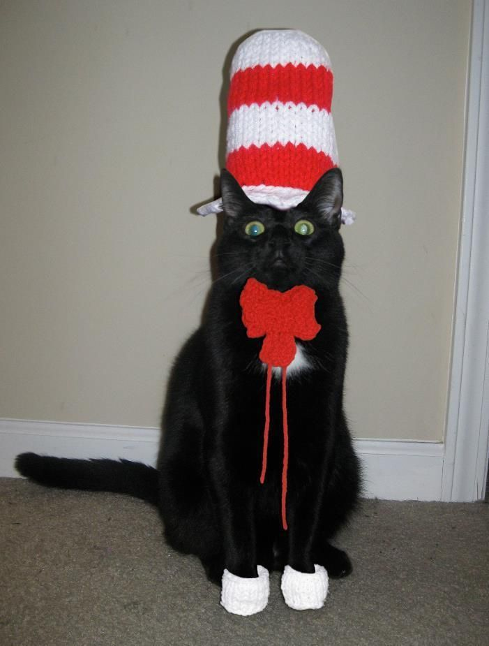 18 Amazing Handmade Halloween Pet Costumes - Cat in the Hat