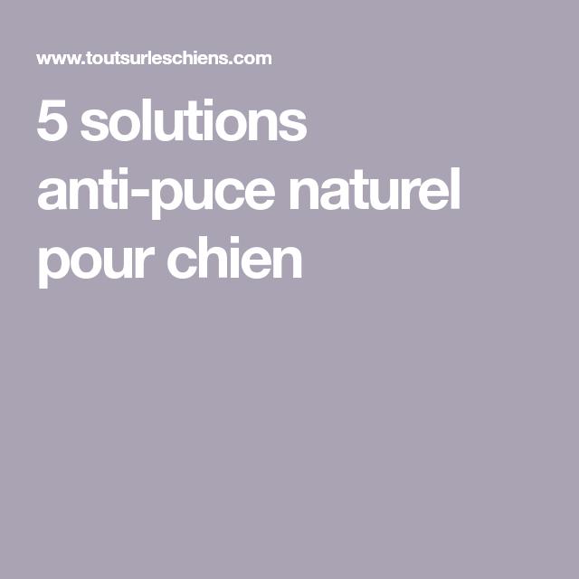 5 solutions anti-puce naturel pour chien   Anti puces naturel, Anti puce, Anti puce chien
