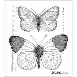 """$6.00 - LaBlanche Silicone Stamp 2.5""""x3"""" - Measured Butterflies"""