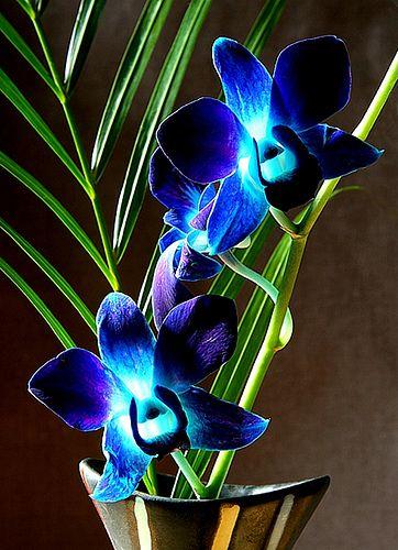 Singapore Orchid Purple Orchids Orchid Flower Orchids