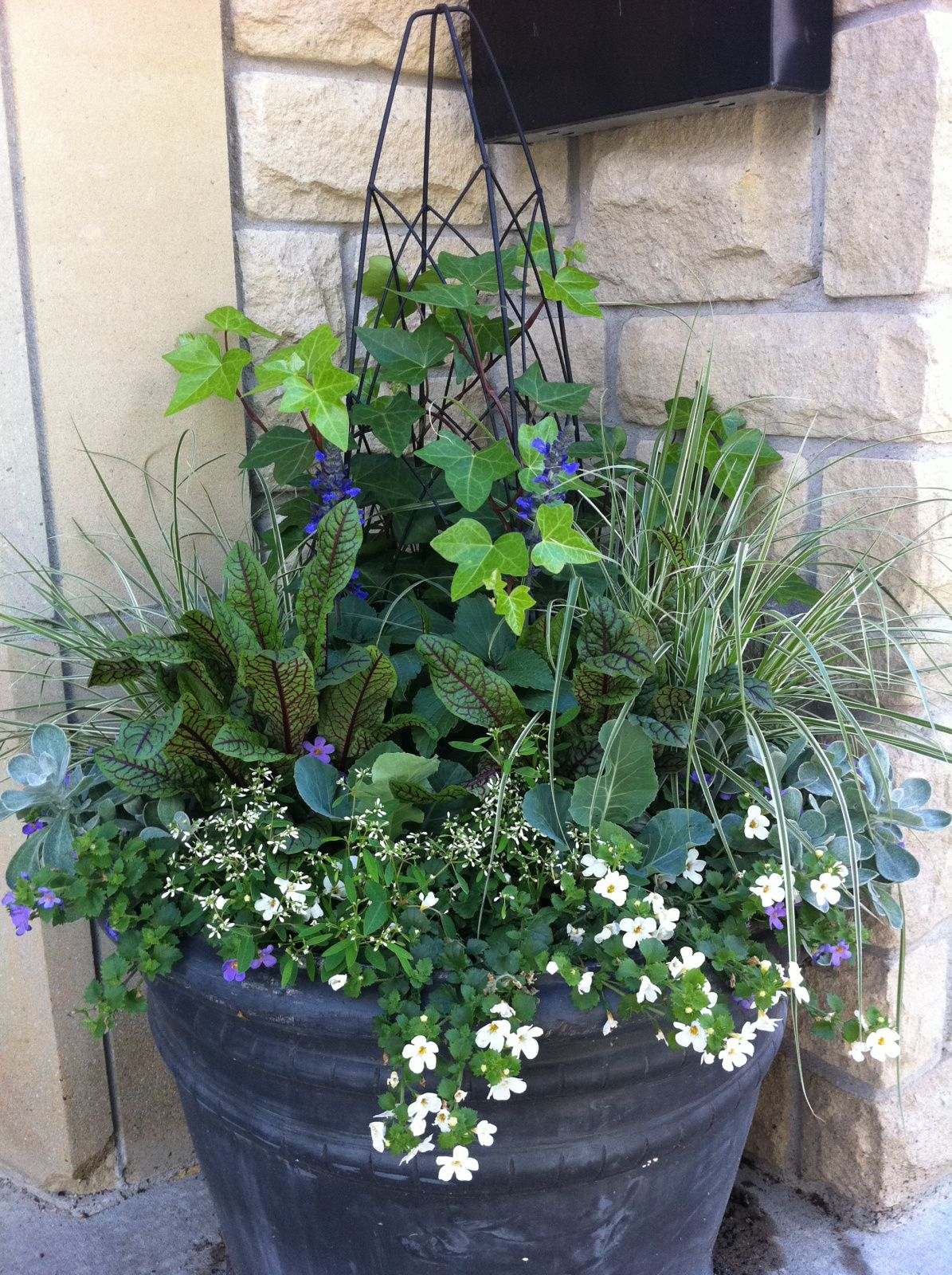 Sun Or Shade Containers For Both Container Plants Plants