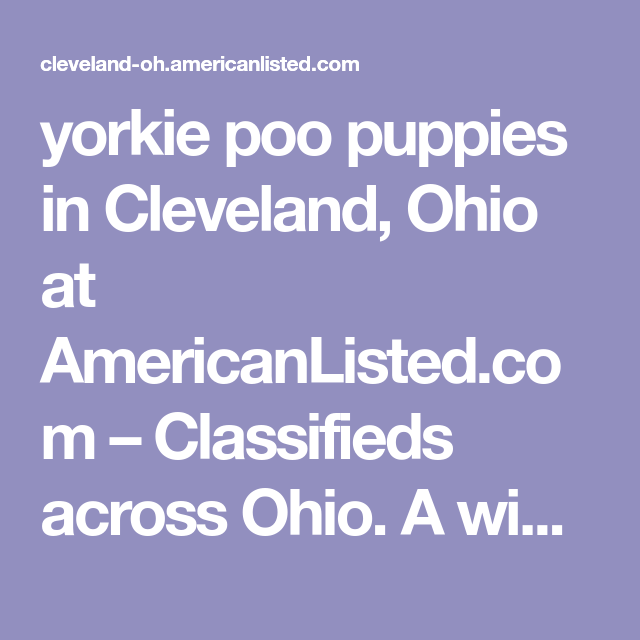 Yorkie Poo Puppies In Cleveland Ohio At Americanlisted Com Classifieds Across Ohio A Wide Variety Of Classified Ads Bu In 2020 Yorkie Poo Puppies Yorkie Poo Yorkie