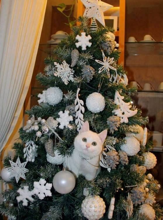 soo cute white christmas tree cat. Black Bedroom Furniture Sets. Home Design Ideas