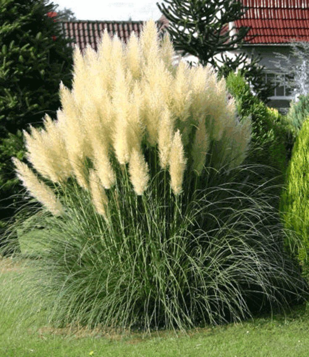 Gräsersorten pasgras gräser sorten