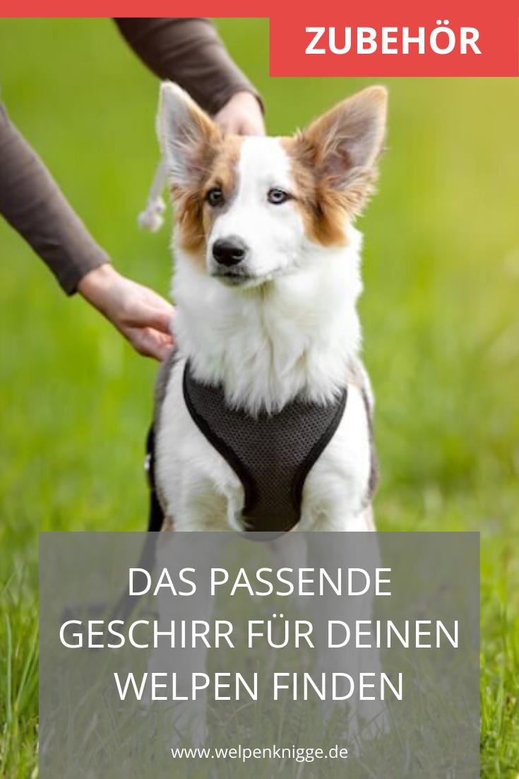 Welpengeschirr In 2020 Welpen Hunde Hundewelpen