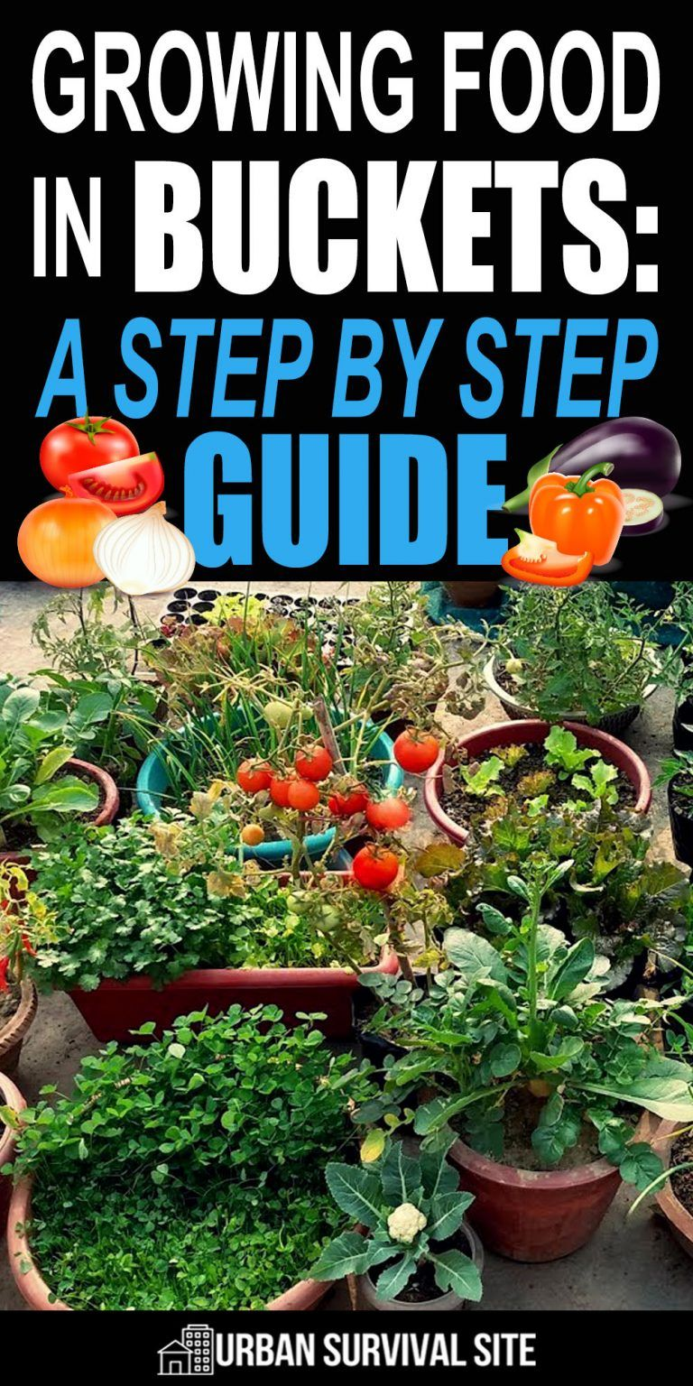8983372d2a659a61dd15fc311eb8d2dd - Grow Food Anywhere The New Guide To Small Space Gardening