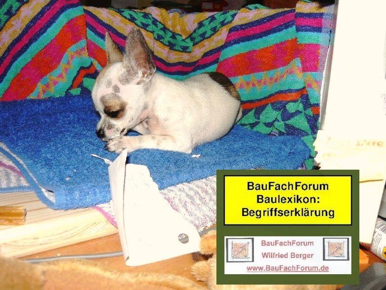 Chihuahua Hunderassen Mini Chihuahua Kamerad Dog Helfer Www Baufachforum De Baufachforum Seepark Pfullendorf Chihuahua Welpen Hunderassen Hunderasse