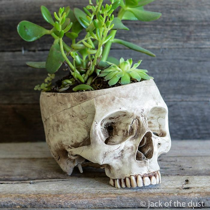 decorative-skulls-jack-dust-andrew-firth-28