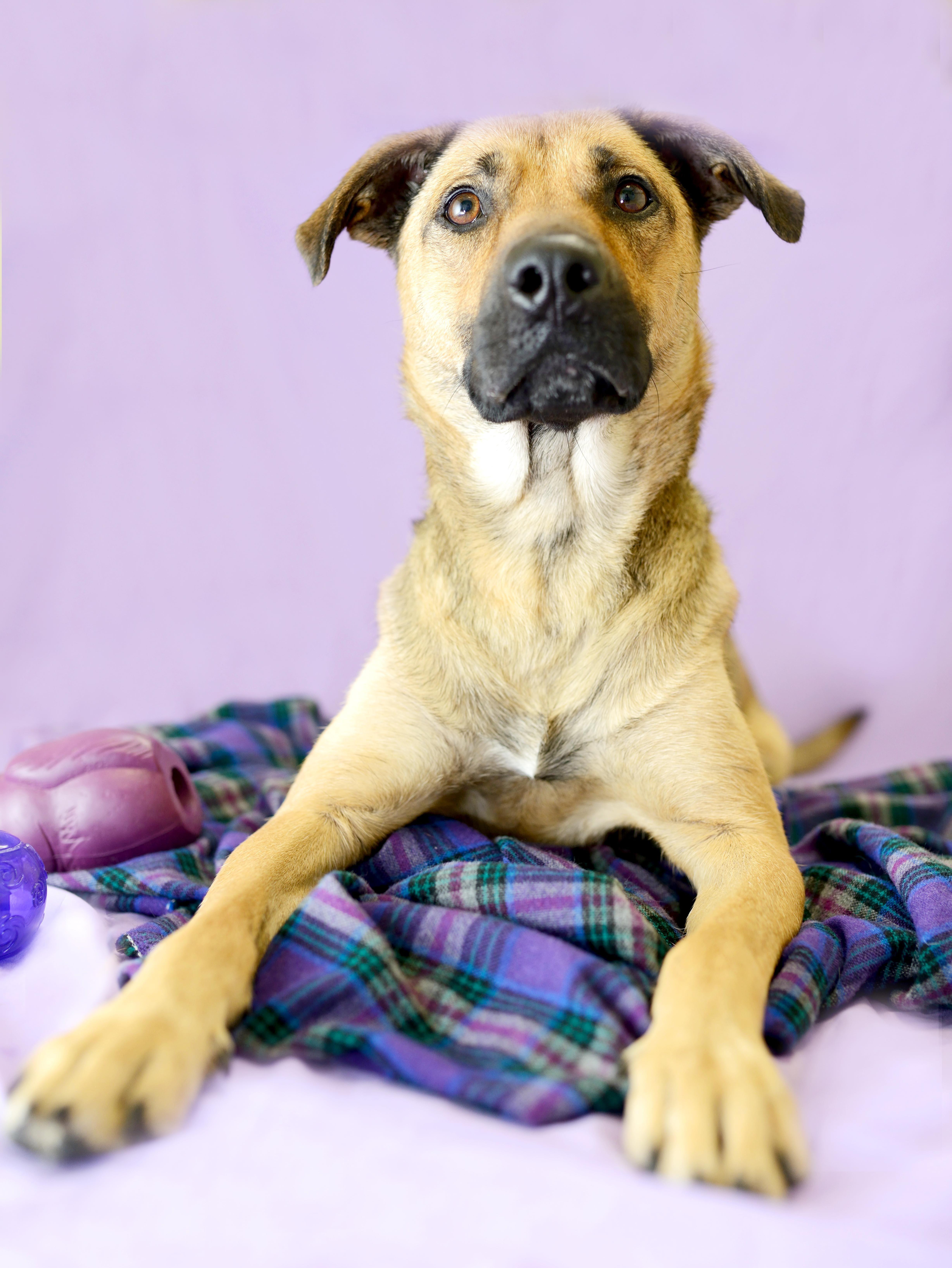 Adopt Maia On Dog Search German Shepherd Dogs Dog Mixes