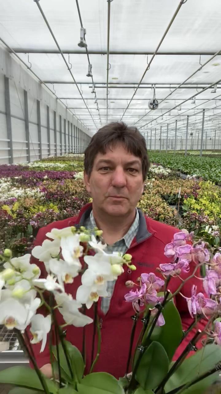 Faire Orchideen aus Ostfriesland zu dir nach Hause