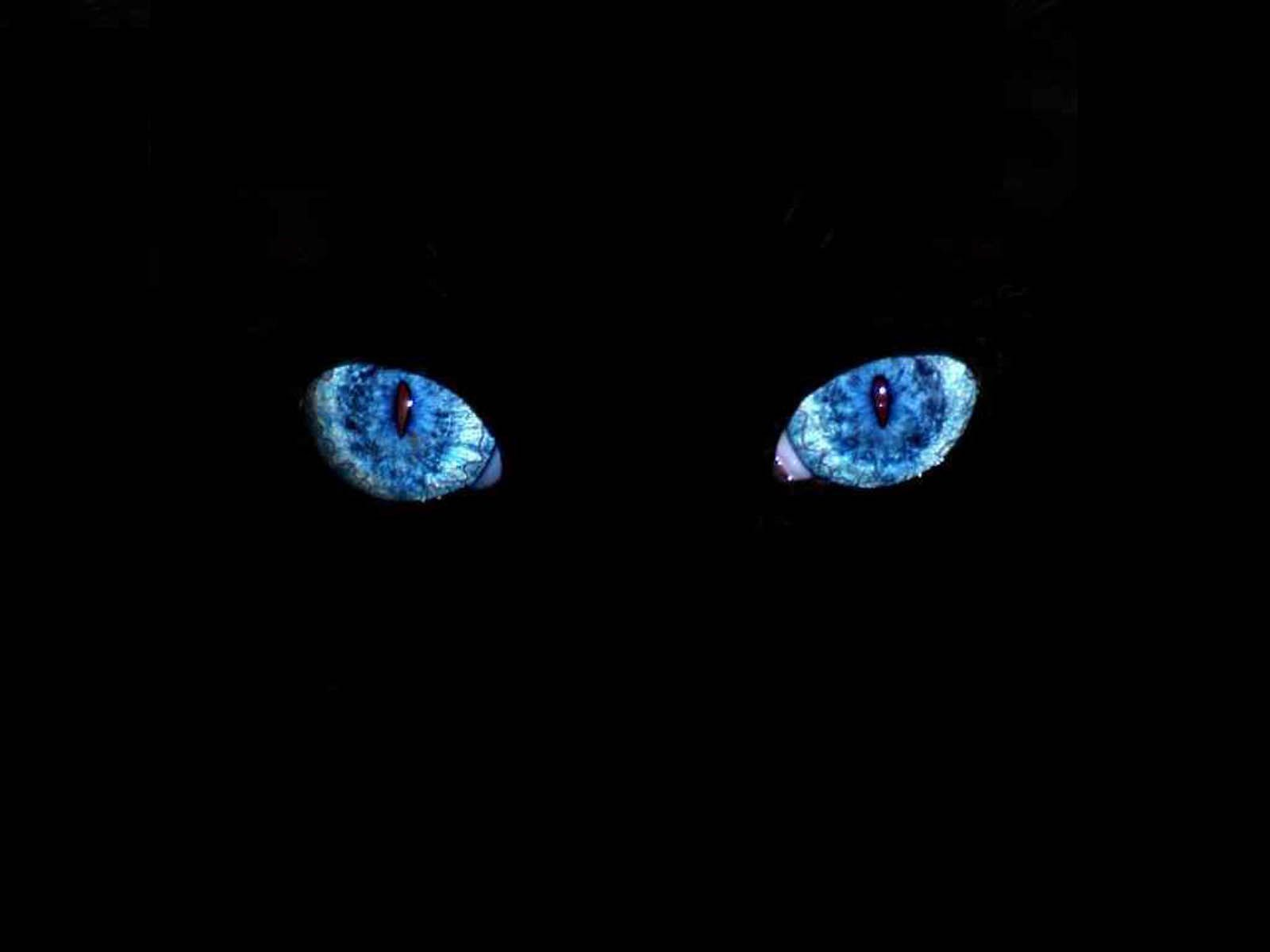 Hd Blue Eyes Wallpapers And Photos Hd Uncategorized Wallpapers 1280 1024 Blue Eyes Wallpapers 46 Wallpa Eyes Wallpaper Cat With Blue Eyes Black Cat Halloween