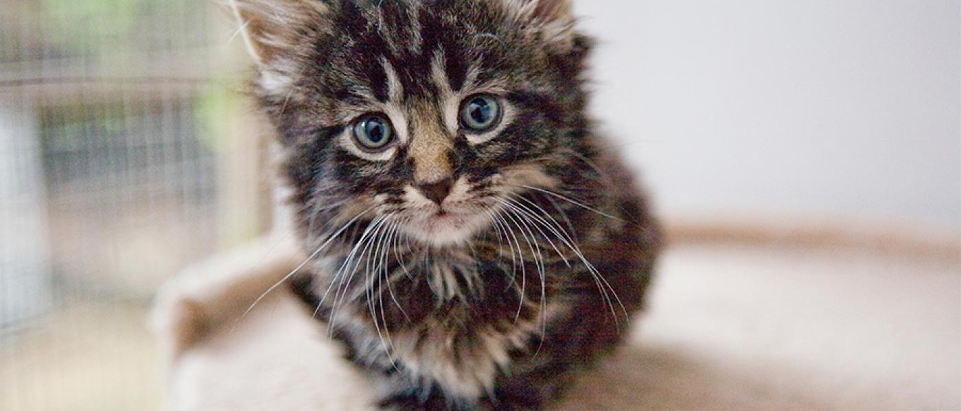 Fluffy Kitten In 2020 Kitten Kitten Eyes Newborn Kittens