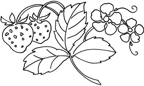 strawberry plant coloring page that would be great for embroidery