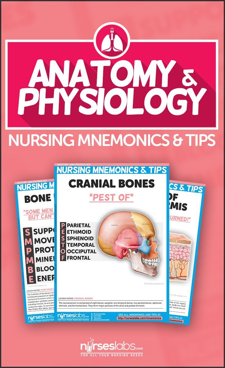 Anatomy and Physiology Nursing Mnemonics & Tips | School | Pinterest ...