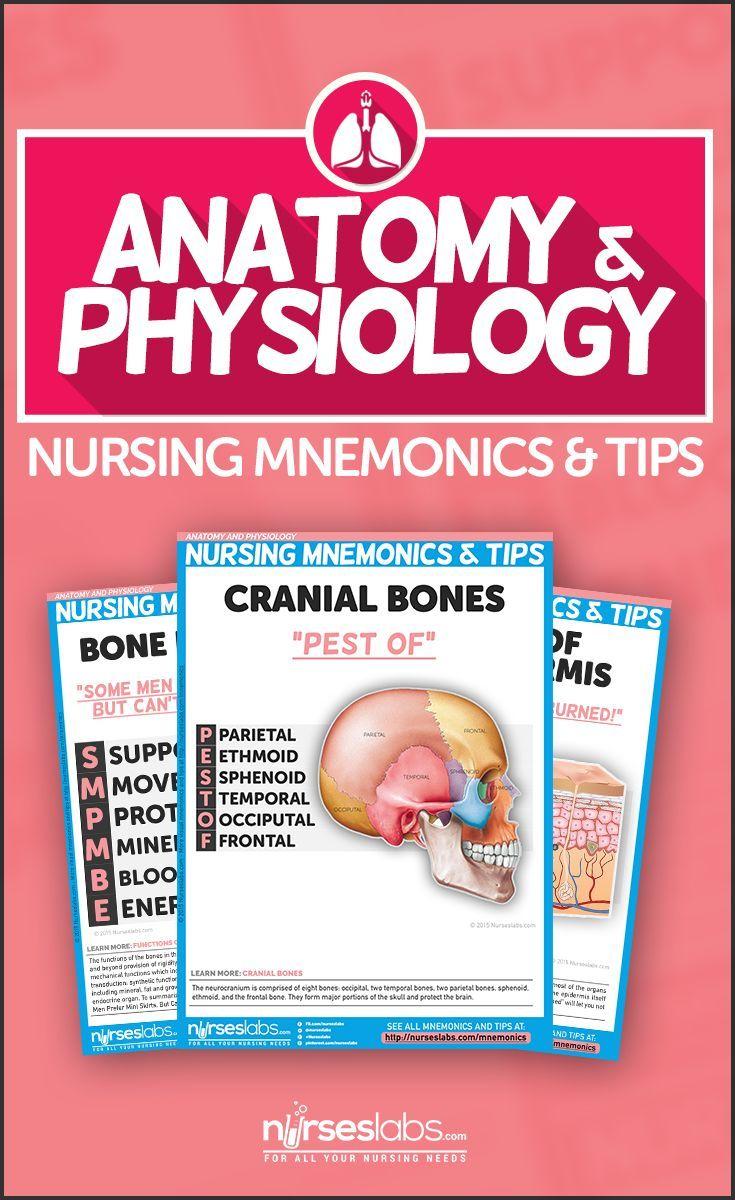 Anatomy and Physiology Nursing Mnemonics & Tips | School | Pinterest ...