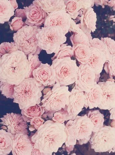 Roses vintage iphone wallpaper  Handy  Rosa hintergrund