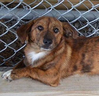 Brownsboro Al Corgi Mix Meet Nala A Dog For Adoption Http