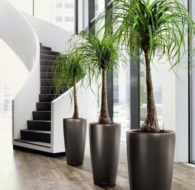 19 plantas de interior sin mantenimiento | Plantas de interior ...
