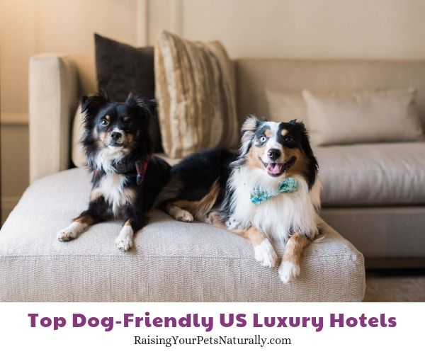 Top Dog Friendly Luxury Hotels And Pet Friendly 5 Star Boutique