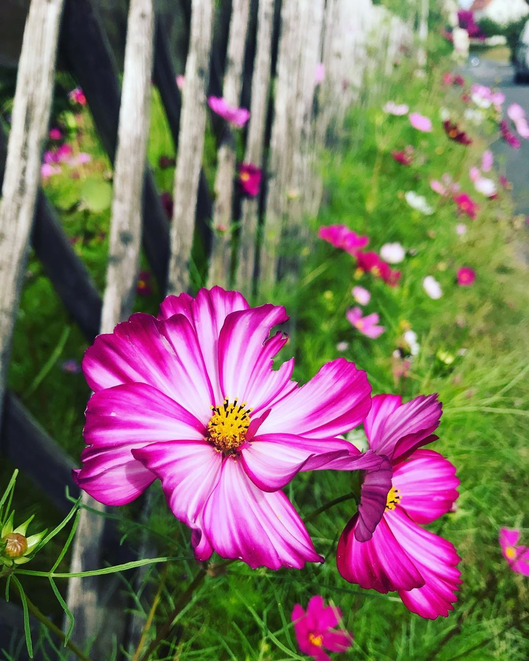 Garden Decoration Ideas Adli Kullanicinin Cute Panosundaki Pin 2020 Resim Garten