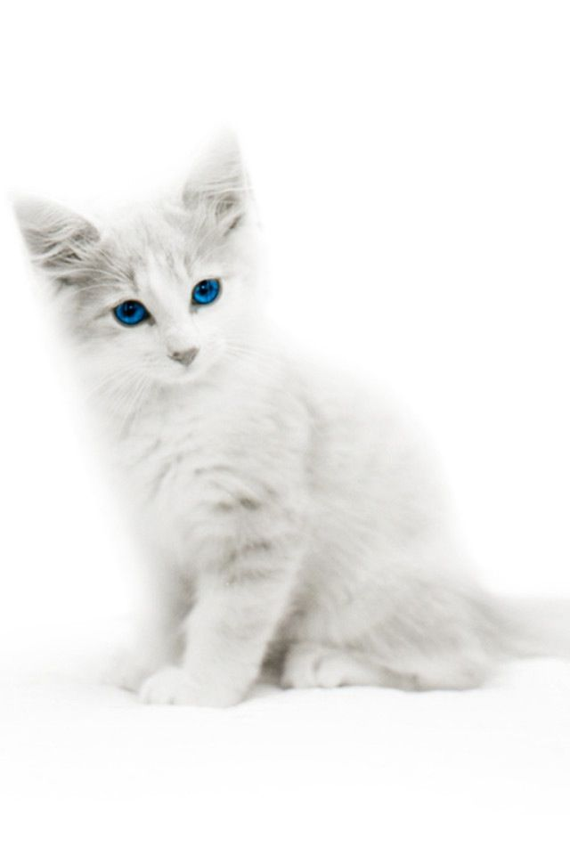 Pin By Patricia Gross On Sections 30 Grey Kitten Cat With Blue Eyes Cute Animals