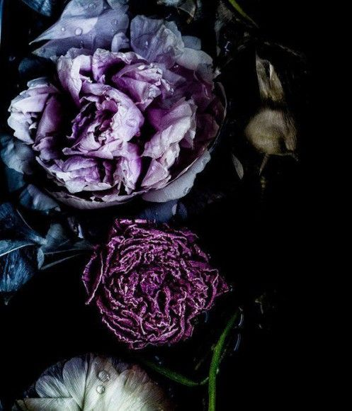 Exploring The History Of A Colour Purple Elle Decoration Dark Flowers Dark Floral Flowers Photography