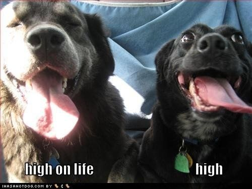22 Pictures of Dogs Who Look Like They Are High