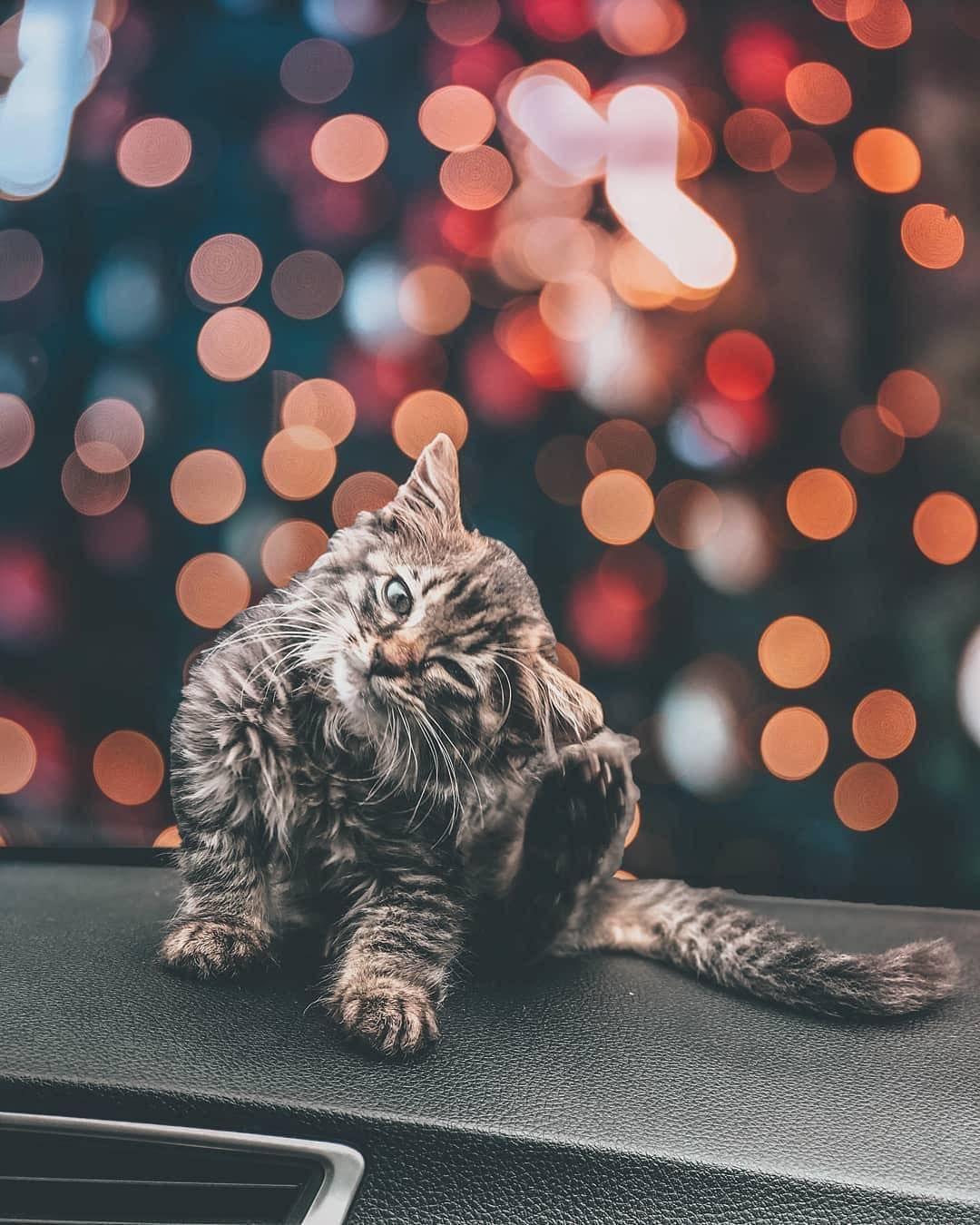Bokeh Kitten 30 9k Likes 345 Comments Visual Ambassadors Visualambassadors On Instagram To Photography Guidelines World Photography Bokeh Photography