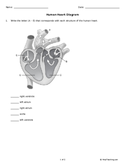 Write the letter a e that corresponds with each structure of the human heart diagram grade 8 free printable tests and worksheets ccuart