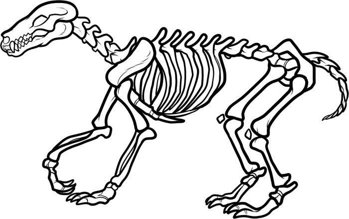 Free Dinosaur Skeleton Coloring Page Animal Skeletons Dog
