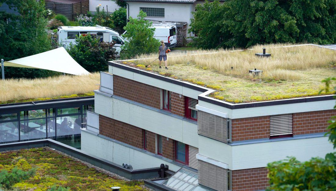 Moderne Gebäude mit bepflanzten Dächern und Kies – Dachbepflanzung Ideen