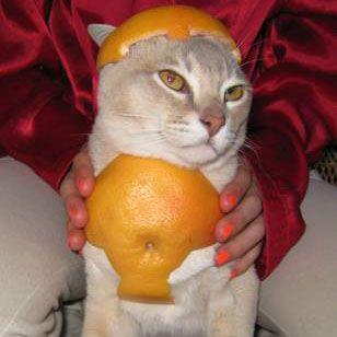 Cats wearing fruit