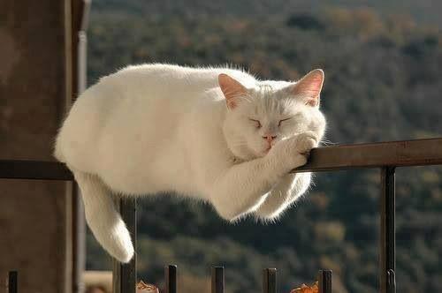 Cat Sleeping on Rail