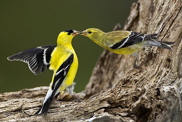 Sharing A Seed by Gerald Marella