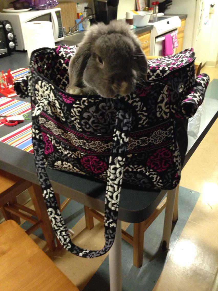 Bunny carrier pet carrier bunny rabbit verabradley