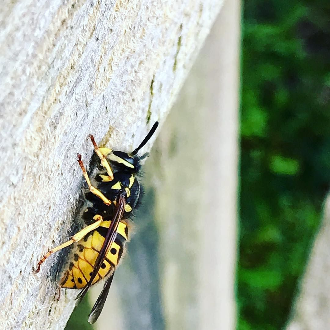 WaspKill UK Bristol Pests (waspkilluk) • Instagram