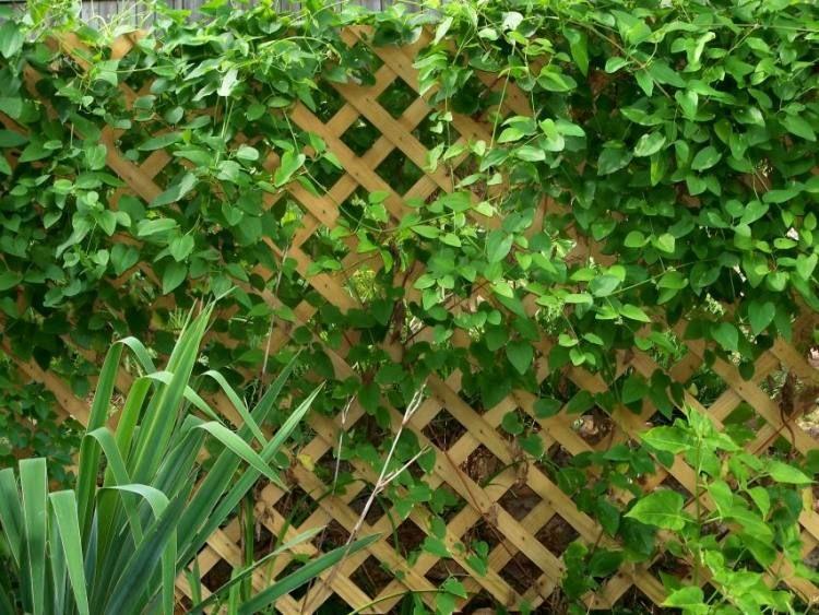 Entretien de jardin facile- conseils pour les jardiniers amateurs ...
